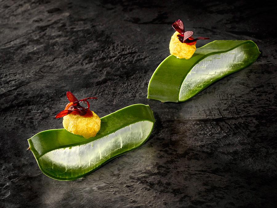 Aloe vera - galanga