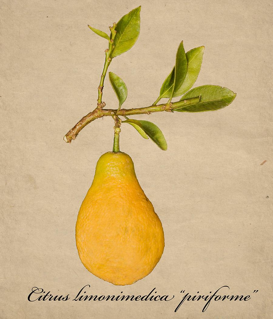 limon-pera